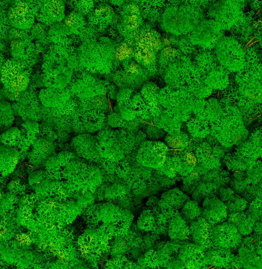 Green Grass Light