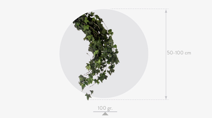 Ivy helix mini